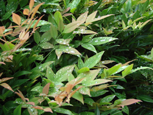 wet garden plants